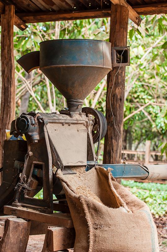 Kenyan Coffee Beans For Trade Members