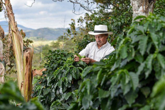 Mexican Coffee Farmer Inspection