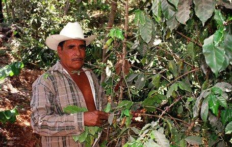 Mexican Coffee Farmer Next To Coffee Beans
