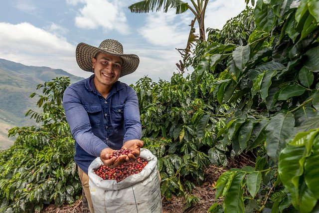 Mexican Coffee Farmer With Coffee Beans
